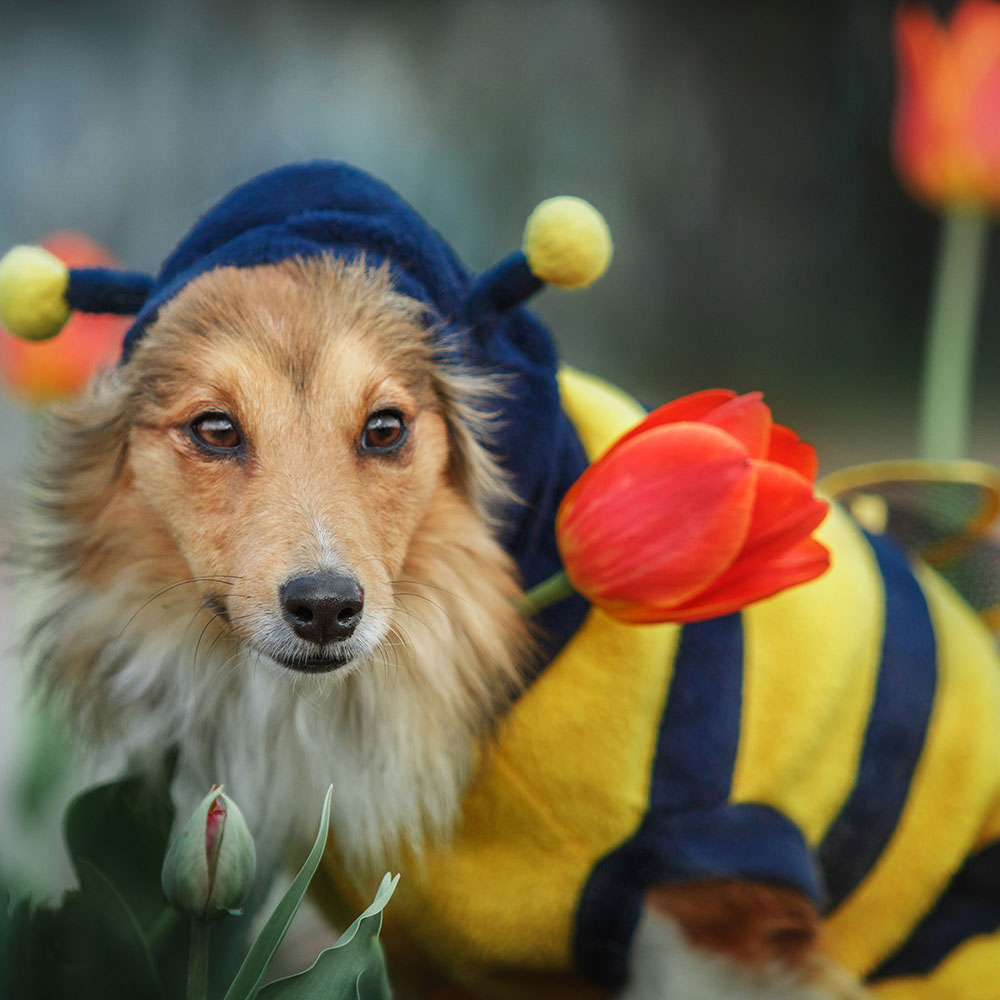 Cutest Dog Photo Contest