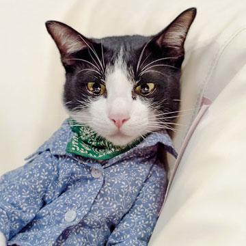 Cutest Pet Photo Contest